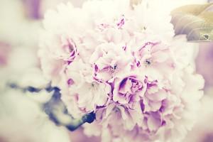 flowers-bouquet-1031266_1920